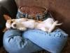 Подушка для домашних животных